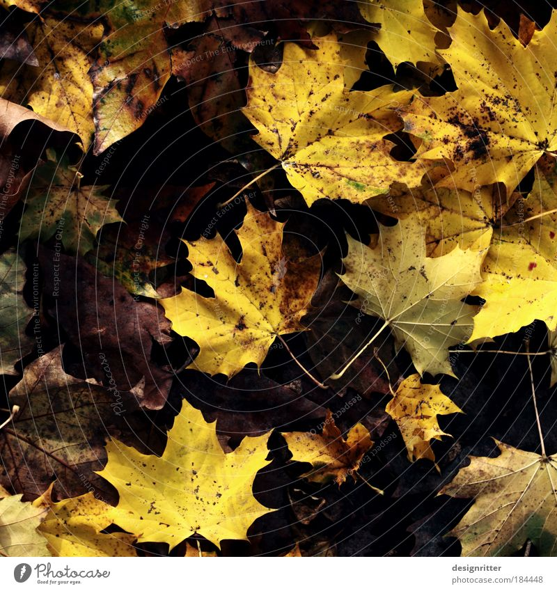 Old Tree Plant Leaf Environment Death Life Autumn Park Rain Weather Wind Climate Hope Transience End