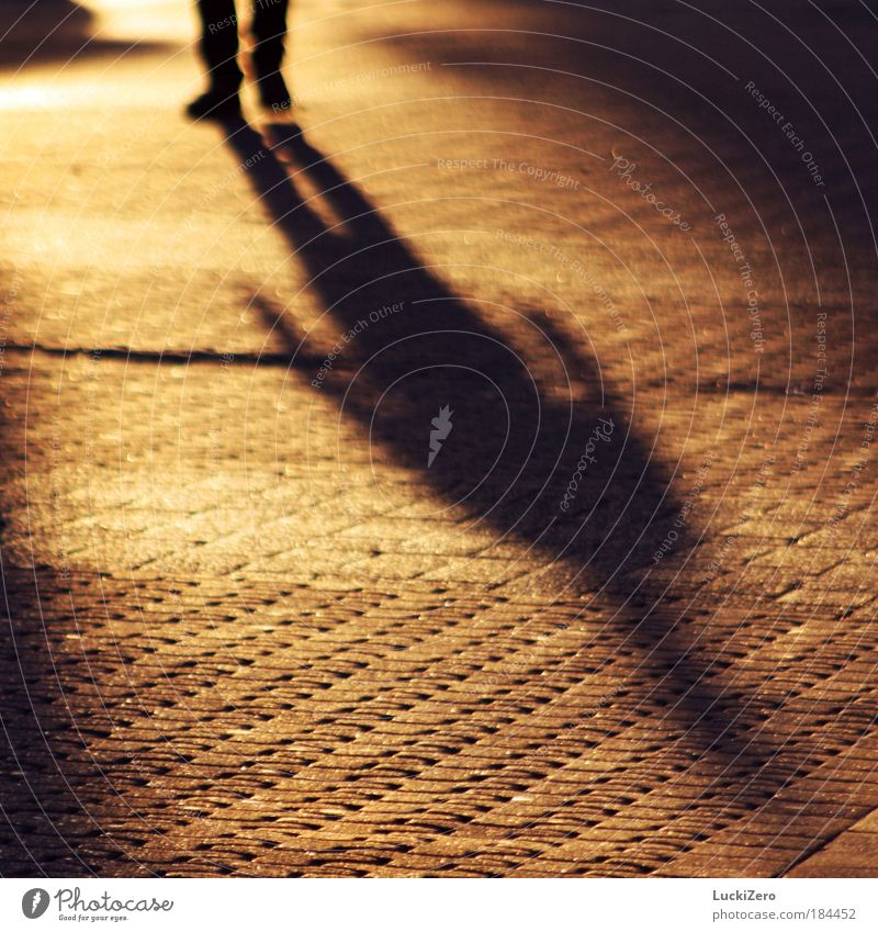 shadow source Colour photo Exterior shot Pattern Copy Space left Copy Space right Copy Space bottom Evening Twilight Light Shadow Contrast Silhouette