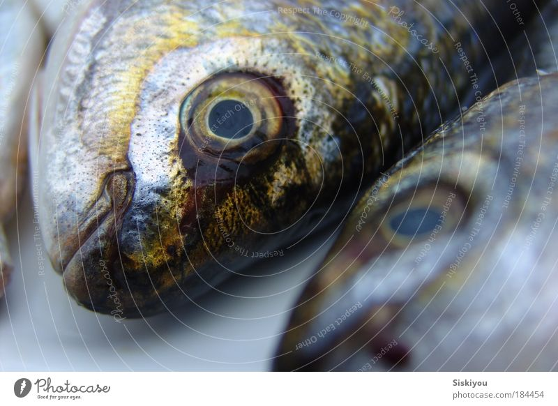 mute as a maggot Colour photo Exterior shot Deserted Deep depth of field Animal portrait Looking Fish Fishing (Angle) Ocean Gastronomy Nature Water Fishing boat