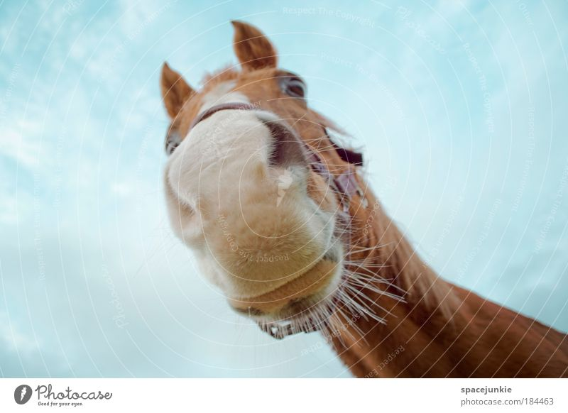 Sky Beautiful Animal Brown Contentment Power Elegant Worm's-eye view Esthetic Cool (slang) Horse Cute Curiosity Animal face Animal portrait Discover