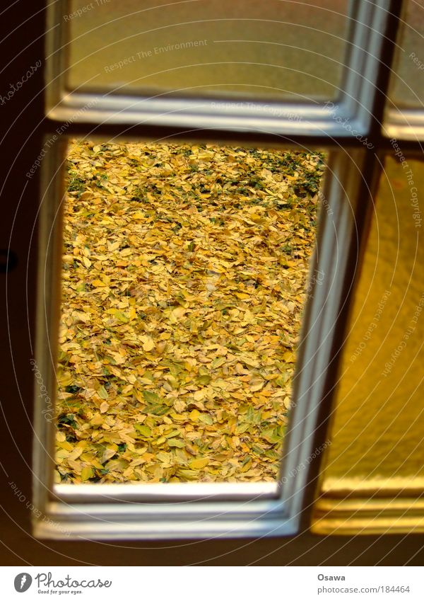 Leaf Yellow Autumn Window Ground Seasons Transparent Window pane Courtyard October Portrait format