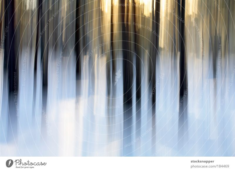 Winter Forest Abstract Background picture Structures and shapes Pine pines Europe Finland The Arctic Snow Landscape Nature Outdoor Tree Blur Finnish