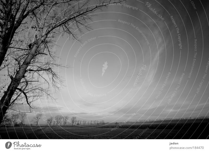 Tree Calm Dark Dream Landscape Field Fear Poverty Tourism Romance Infinity Creepy Discover Black & white photo Surrealism Mystic