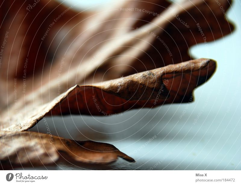 Nature Old Plant Leaf Autumn Death Sadness Brown Environment Gloomy End Transience Decline Dry Beautiful weather Shadow