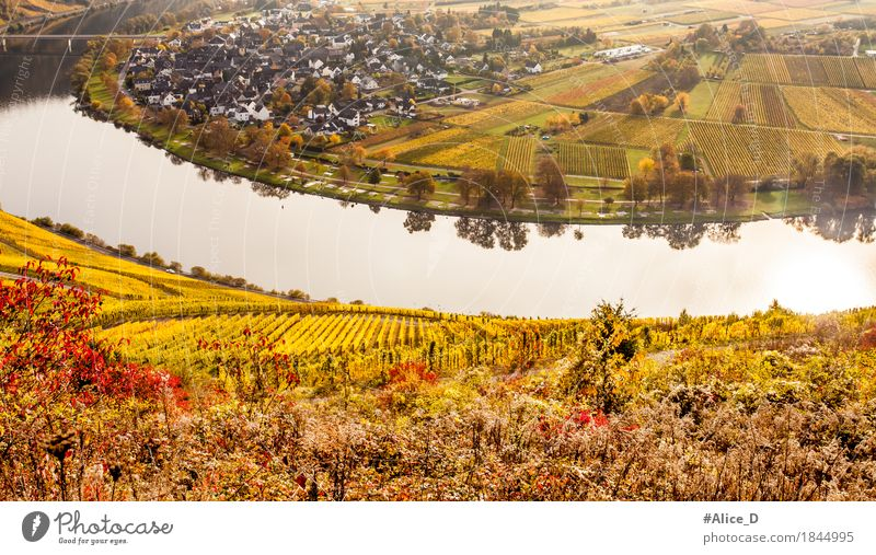 Autumn colourful Moselle landscape and wine-growing village of Wolf Environment Nature Landscape Elements Water Agricultural crop Vine Vineyard Field River bank