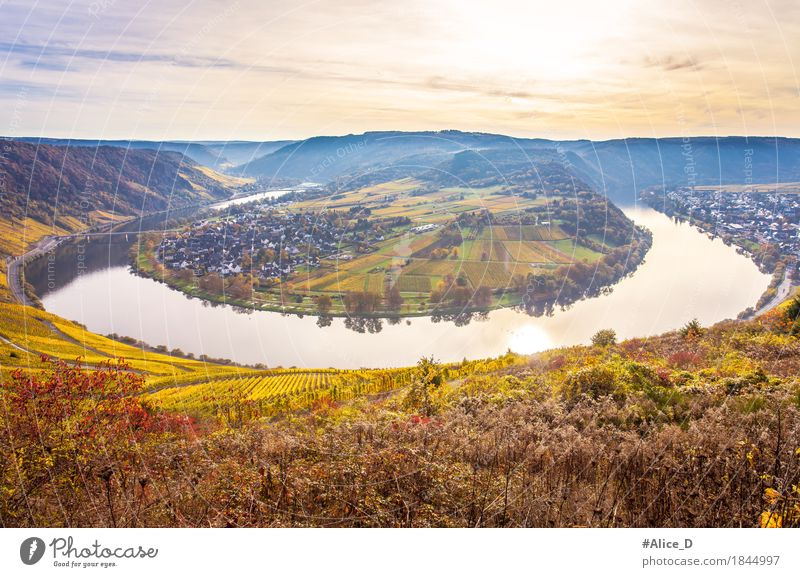 Moselle loop autumn landscape Environment Nature Landscape Elements Water Sky Sunlight Autumn Plant Field Hill River bank Vineyard Wine growing Wolf Kroev