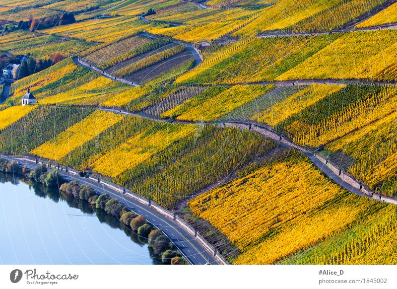 Autumn Moselle Vines Landscape Vacation & Travel Tourism Hiking Agriculture Forestry Industry Nature Plant Vineyard Wine growing Hill Lakeside Natural Beautiful