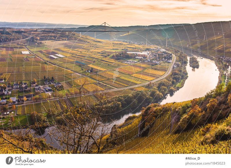Autumn Moselle landscape Environment Nature Landscape Water Horizon Sunrise Sunset Vineyard Meadow Field Hill River bank Autumnal landscape Ürzig