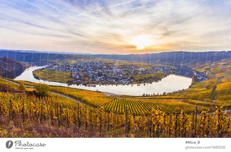 Autumn Moselle and Golden Wine Landscape Vacation & Travel Tourism Trip Hiking Autumnal colours Autumnal landscape Nature Water Sky Horizon Beautiful weather