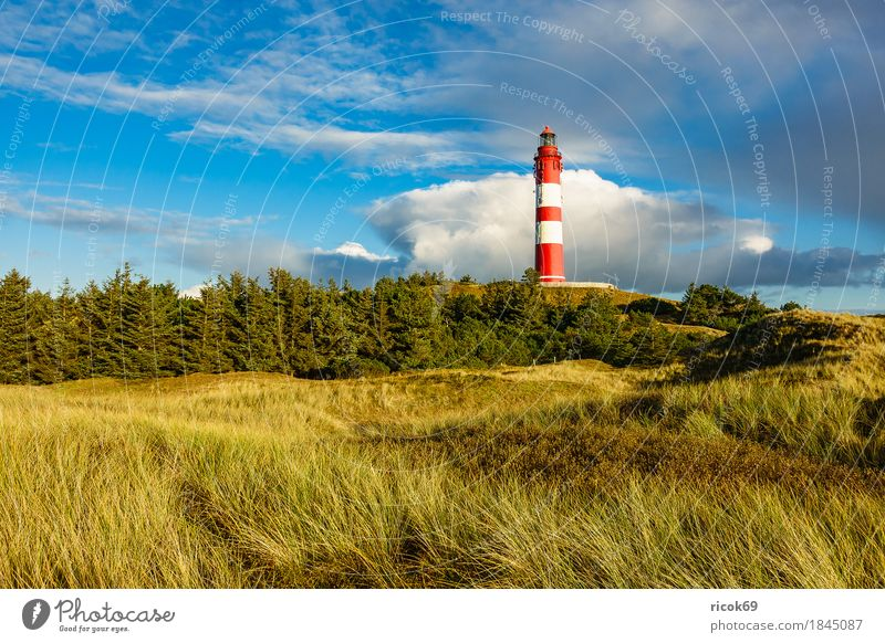 Lighthouse in Wittdün on the island Amrum Relaxation Vacation & Travel Tourism Island Nature Landscape Clouds Autumn Tree Forest Coast North Sea Architecture