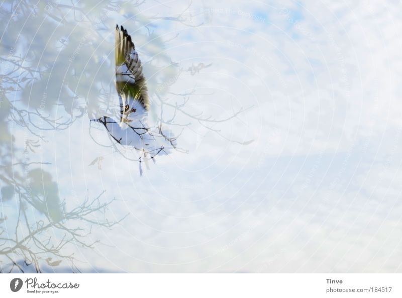 Sky Tree Animal Autumn Freedom Dream Bird Flying Elegant Feather Wing Seagull Transparent Hover Double exposure