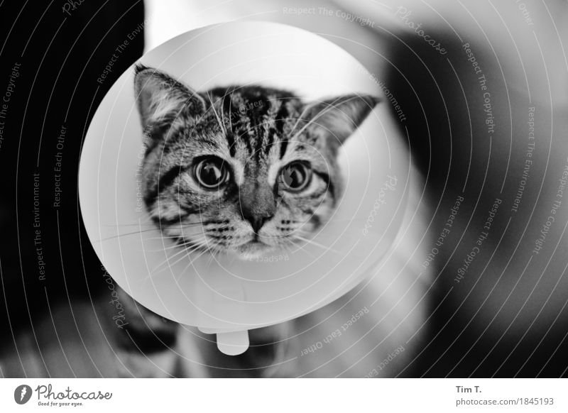 Sick Animal Pet Cat 1 Contentment Domestic cat Collar Illness Black & white photo Interior shot Deserted