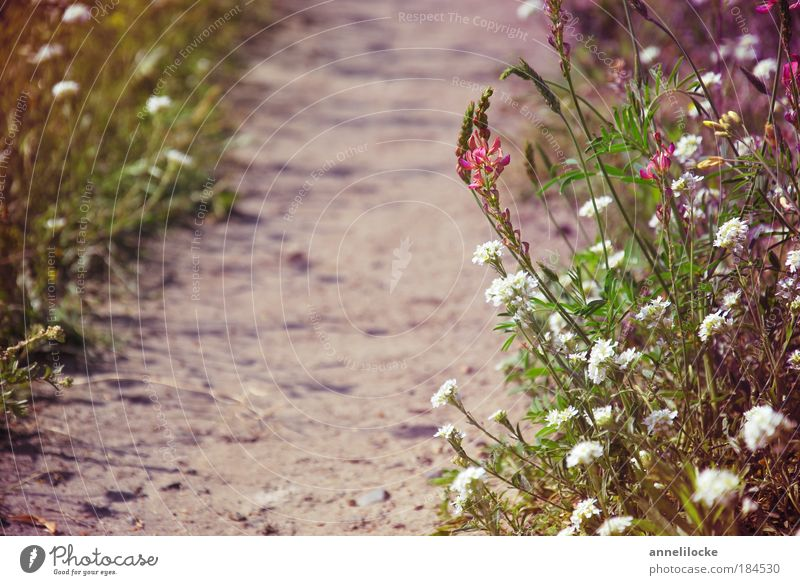 Nature Plant Summer Vacation & Travel Far-off places Meadow Freedom Landscape Environment Grass Garden Blossom Sand Lanes & trails Park Earth