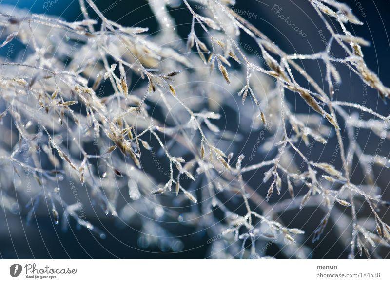 Nature Blue Plant Calm Cold Grass Snow Bright Glittering Park Ice Design Illuminate Bushes Drops of water Frost