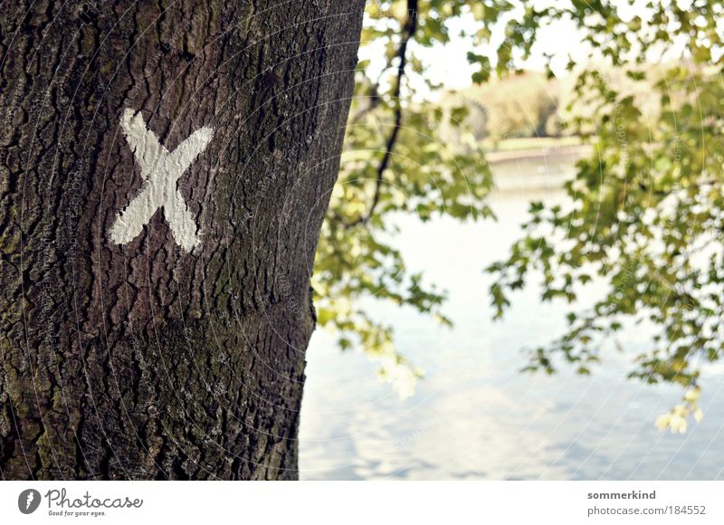 Nature Plant Water Summer Sun Tree Landscape Environment Autumn Spring Wood Lake Signs and labeling Branch Beautiful weather Letters (alphabet)
