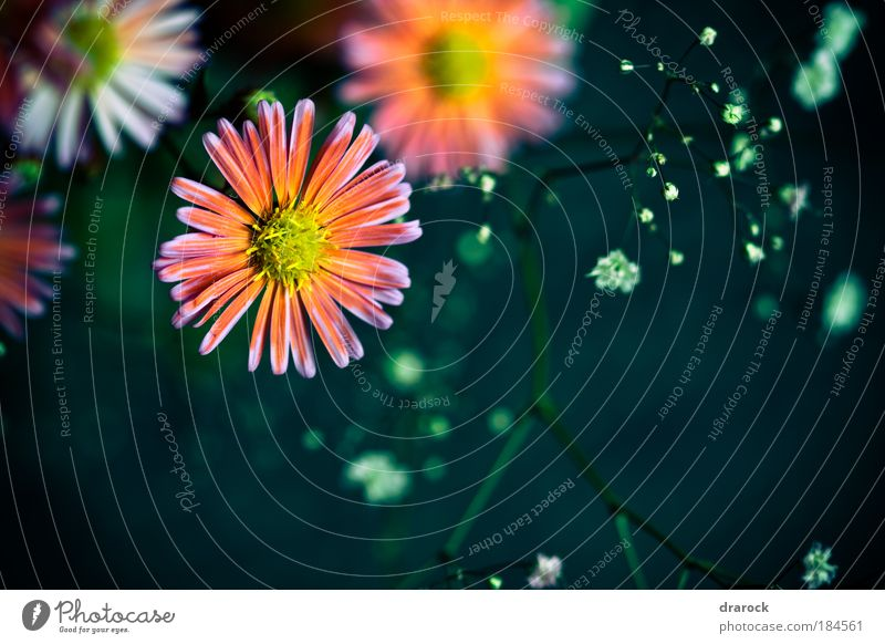 Dreams III Nature Beautiful Flower Green Plant Yellow Lomography Blossom Spring Orange Pink Passion Beautiful weather Colour Purple