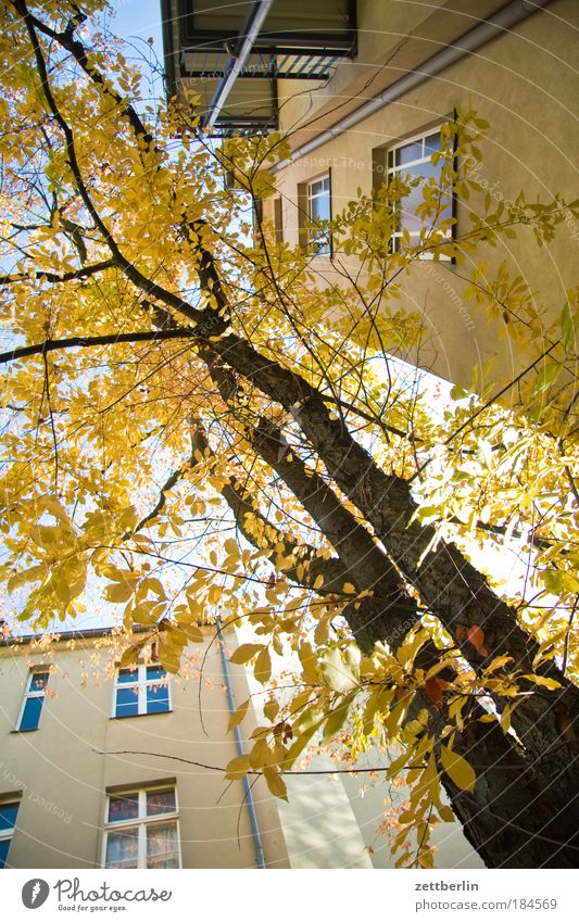 October Leaf Multicoloured Gold Autumn Seasons Autumn leaves House (Residential Structure) rear building Backyard Story Tenant Landlord Tree Tree trunk Window