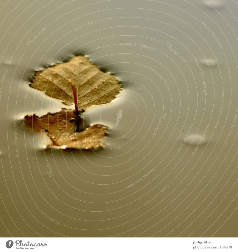 Nature Water Calm Leaf Autumn Lake Environment Wet Gloomy Birch tree End Change Transience Easy Pond Tree