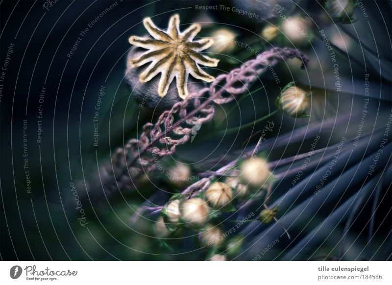 Nature Beautiful Plant Colour Grass Moody Environment Esthetic Violet Flower Transience Fantastic Natural Poppy Bouquet Blur
