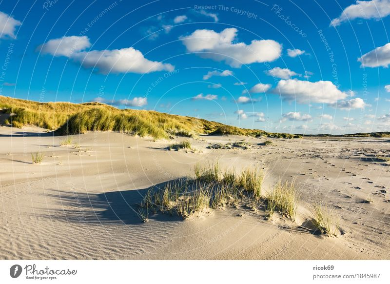 Nature Vacation & Travel Blue Ocean Landscape Relaxation Clouds Beach Yellow Autumn Coast Sand Tourism Island North Sea Schleswig-Holstein