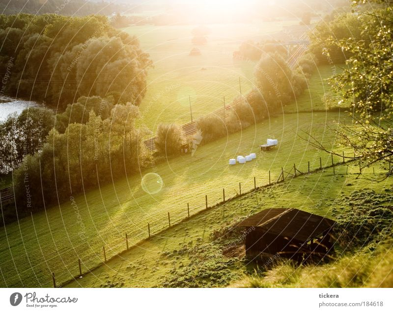 Murtal Cycle Path Colour photo Evening Light Sunlight Sunbeam Back-light Nature Landscape Summer Meadow Field River Train travel Authentic Simple Natural Gold