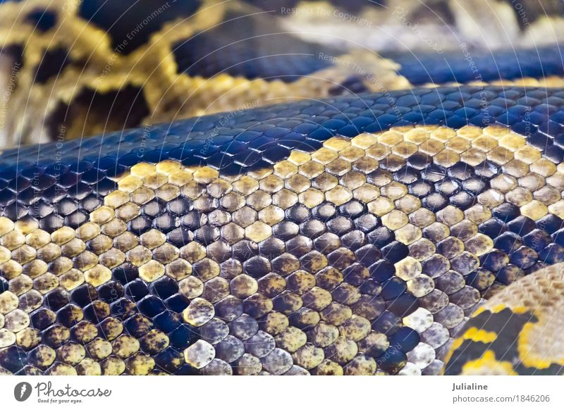Photo of snake skin close up in zoo Animal Skin Protection Zoo Leather Consistency Reptiles Snake Camouflage Burmese Anacondas