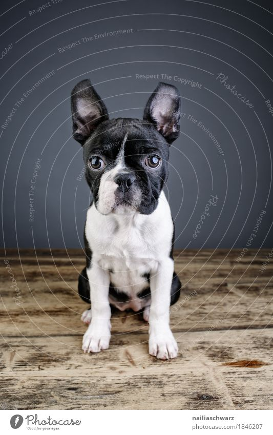 Dog Beautiful Animal Joy Funny Style Sit Happiness Cute Friendliness Curiosity Discover Surprise Pet Positive Interest