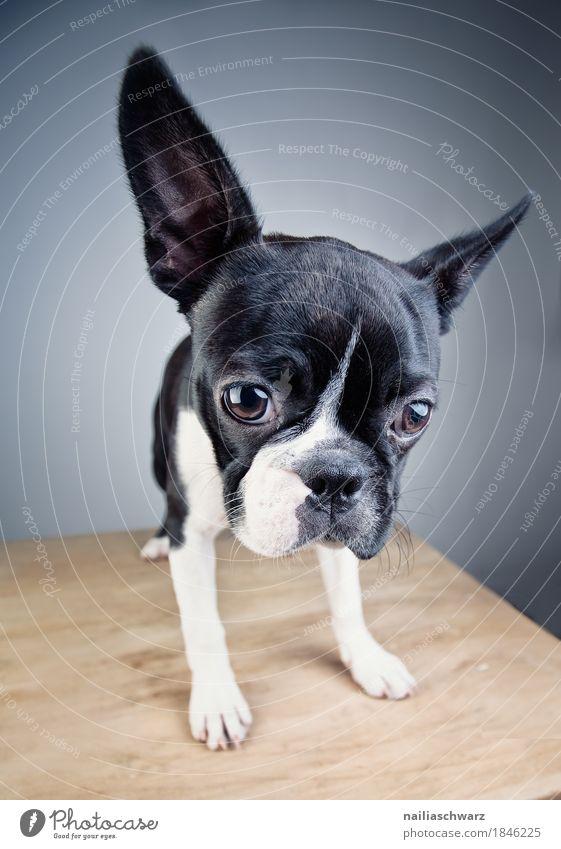 Dog Beautiful Animal Joy Love Style Happiness Wait Observe Cute Friendliness Curiosity Pure Pet Positive Expectation