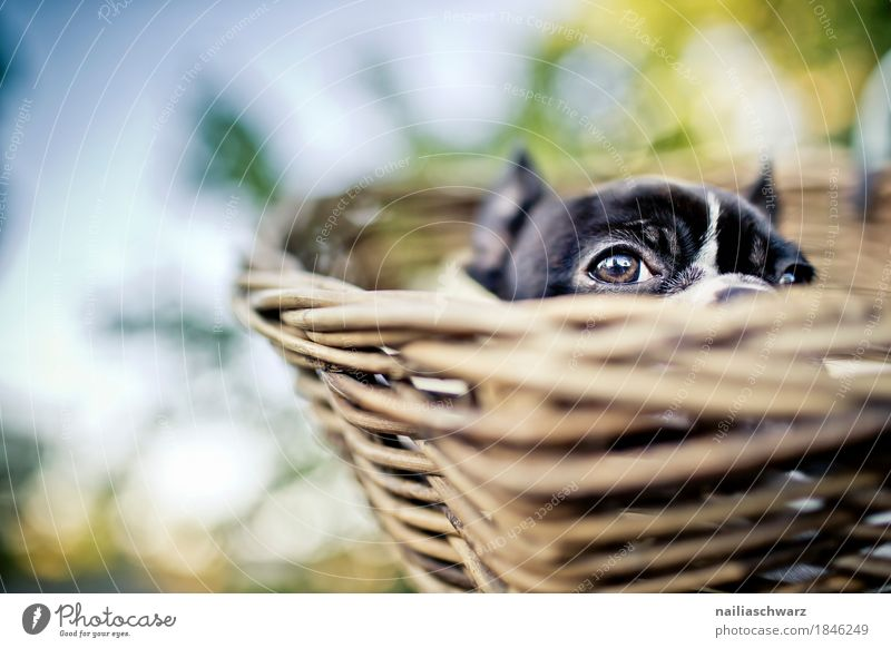 Nature Dog Plant Relaxation Animal Joy Baby animal Funny Lie Bicycle Happiness To enjoy Beautiful weather Observe Cute Curiosity