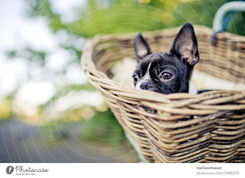 Dog Summer Beautiful Animal Baby animal Spring Natural Garden Leisure and hobbies Park Lie Bicycle Happiness To enjoy Beautiful weather Observe