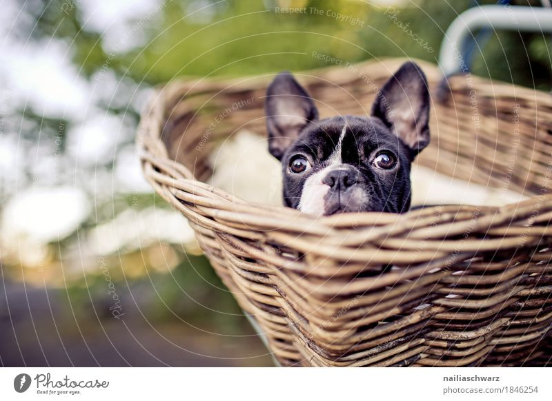 Dog Vacation & Travel Summer Beautiful Relaxation Animal Black Spring Brown Trip Bicycle Observe Adventure Cute Curiosity Cycling tour