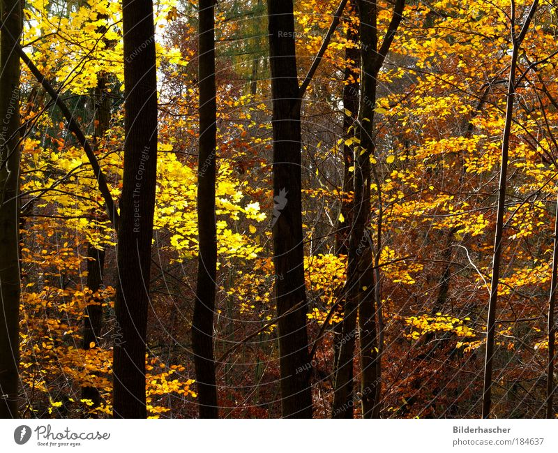 In the autumn forest Colour photo Multicoloured Exterior shot Deserted Day Light Shadow Contrast Sunlight Trip Environment Nature Landscape Plant Autumn