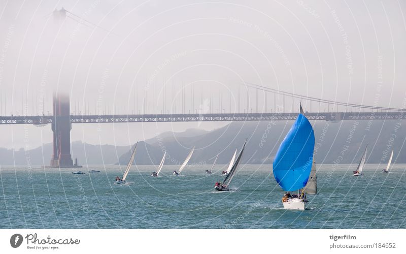 sailboat in san francisco bay Blue Vacation & Travel Summer Watercraft Fog Bridge Uniqueness Logistics Bay Sailing Mobility Landmark Passenger traffic Aquatics