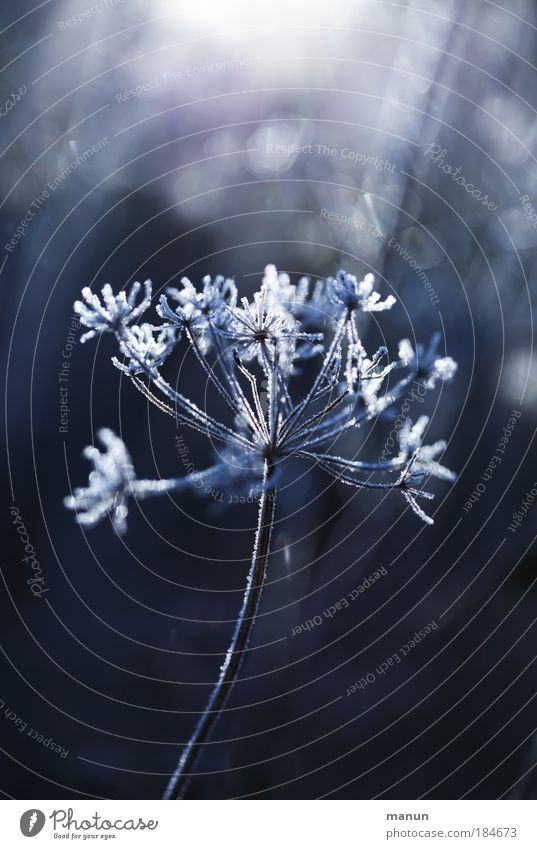 Nature Blue White Plant Sun Winter Calm Cold Snow Autumn Grass Park Ice Glittering Fog Fresh
