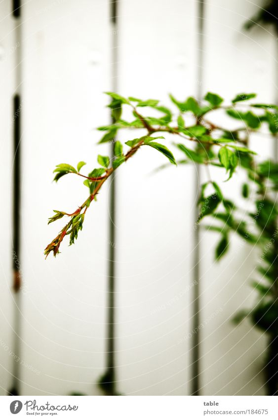 Nature White Green Plant Emotions Garden Freedom Wood Park Power Esthetic Growth Bushes Change Thin Joie de vivre (Vitality)