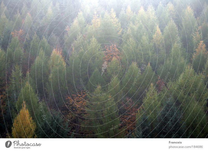 Nature Tree Calm Forest Autumn Mountain Landscape Moody Fog Symmetry Flat Deciduous tree Coniferous trees Highlands Alsace