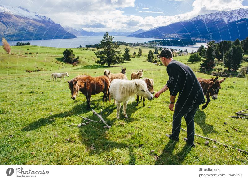Feeding Ponys Lifestyle Wellness Vacation & Travel Trip Adventure Far-off places Freedom Camping Summer vacation Mountain Hiking Fitness Sports Training