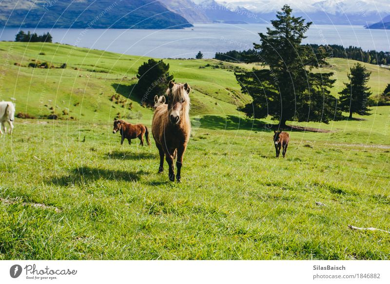 Wild Ponys Nature Vacation & Travel Landscape Animal Far-off places Forest Mountain Lake Tourism Field Earth Trip Hiking Wild animal Group of animals Beautiful weather