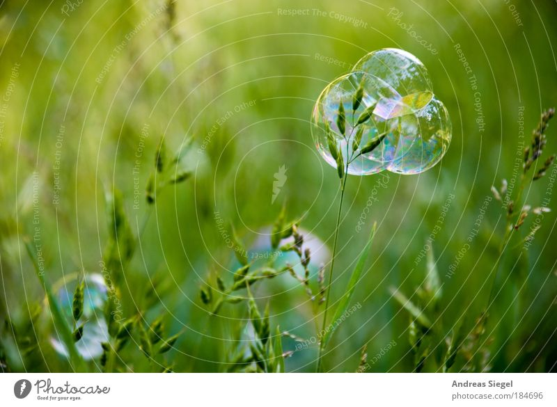 Nature Beautiful Green Plant Summer Joy Detail Meadow Grass Bubble Spring Moody Environment Lifestyle Happiness