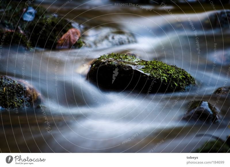 Nature River Water Environment Cold Stone Natural Waves Drinking water Fresh Plant Refreshment Long exposure Brook Moss Flow
