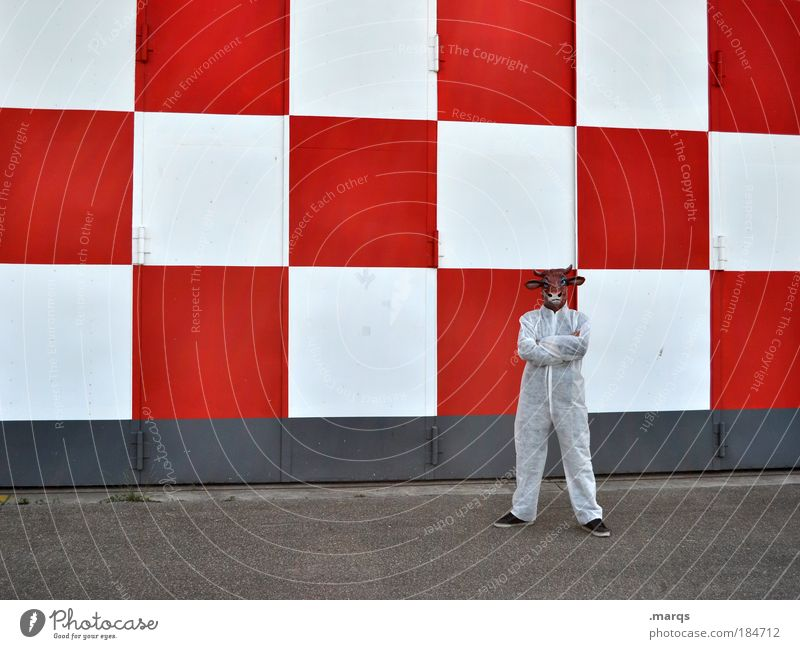 steadfast Colour photo Exterior shot Looking into the camera Style Human being 1 Building Suit Working clothes Zoo Cow Stand Wait Exceptional Uniqueness Funny