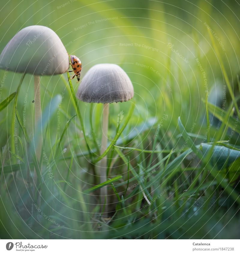 Nature Plant Green Animal Black Autumn Meadow Movement Grass Brown Orange Esthetic Energy Discover Mushroom Effort