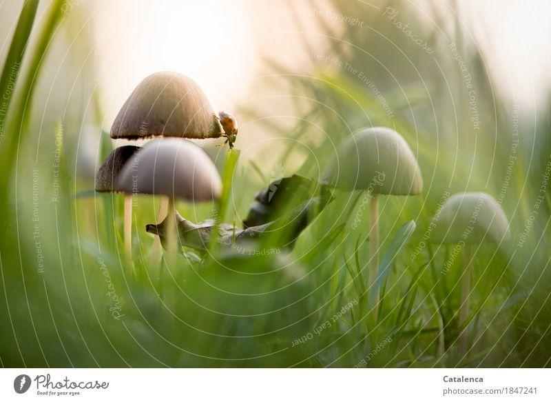 Nature Plant Green Beautiful Sun Animal Autumn Meadow Grass Brown Moody Orange Beginning Drops of water Observe Mushroom