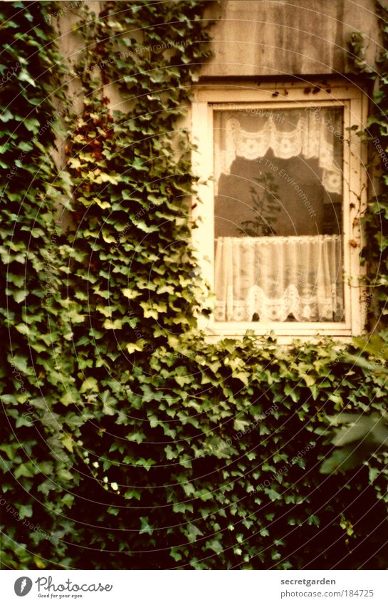 Nature Old Green Calm Loneliness House (Residential Structure) Window Wall (building) Garden Wall (barrier) Sadness Dirty Facade Poverty Growth Change