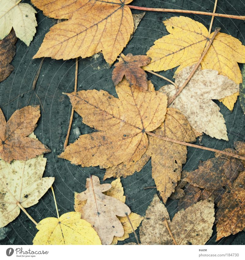 Nature Old Leaf Landscape Environment Street Autumn Lanes & trails Weather Earth Dirty Authentic Floor covering Seasons Pavement Autumn leaves