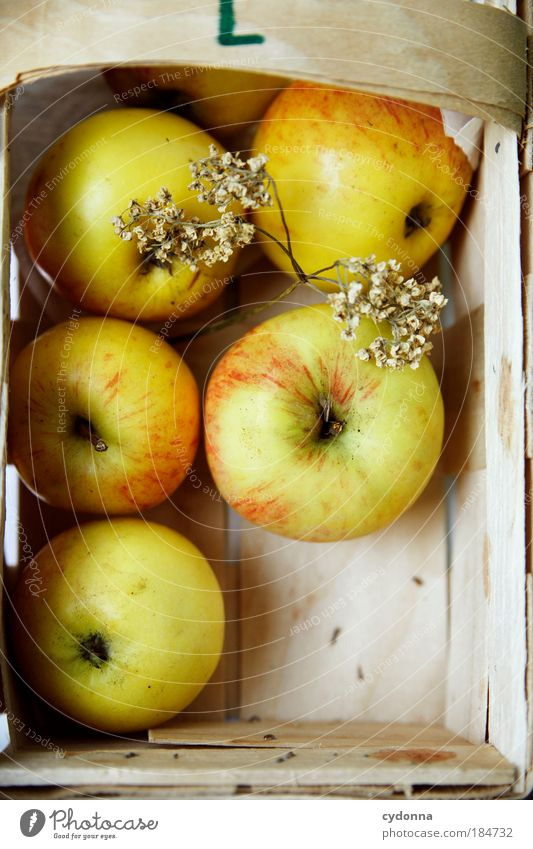 Nature Life Autumn Healthy Contentment Fruit Food Nutrition Apple To enjoy Delicious Harvest Well-being Mature Organic produce Ecological
