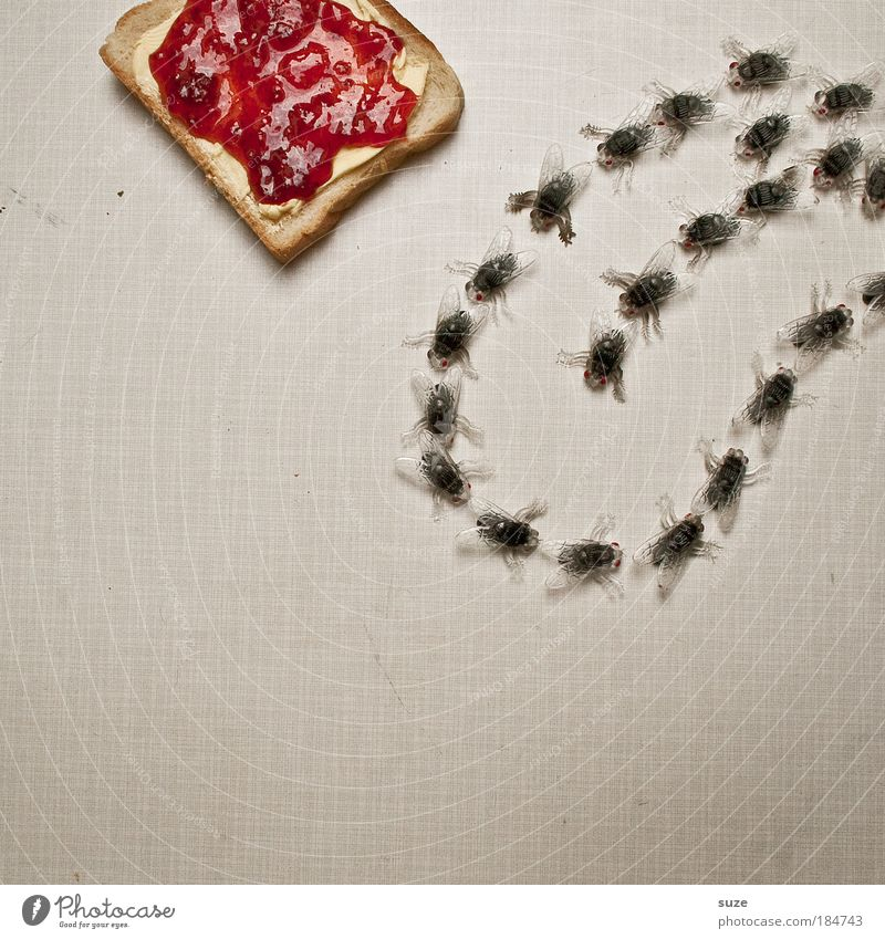 Red Joy Funny Food Fly Nutrition Sweet Creativity Idea Plastic Insect Appetite Bread Delicious Picnic Tongue