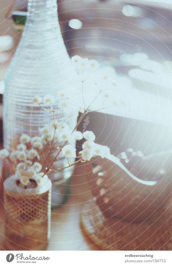 White Plant Autumn Happy Stone Bright Together Flat (apartment) Glass Esthetic Bushes Decoration Living or residing Warm-heartedness Bottle Seasons