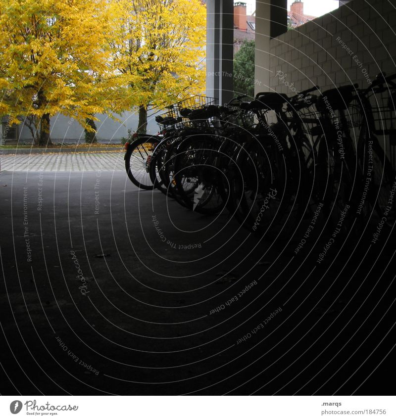 parking space Colour photo Exterior shot Deserted Copy Space bottom Light Shadow Living or residing Backyard Autumn Tree Building Means of transport