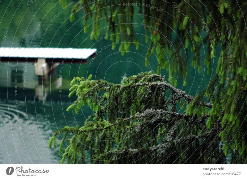 undersea Pond Untersee Footbridge Cold Lake Tree Fir tree Water arosa Branch